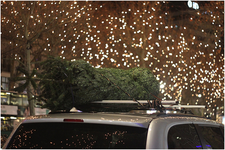 Christmas Tree on roof of car with holiday lights