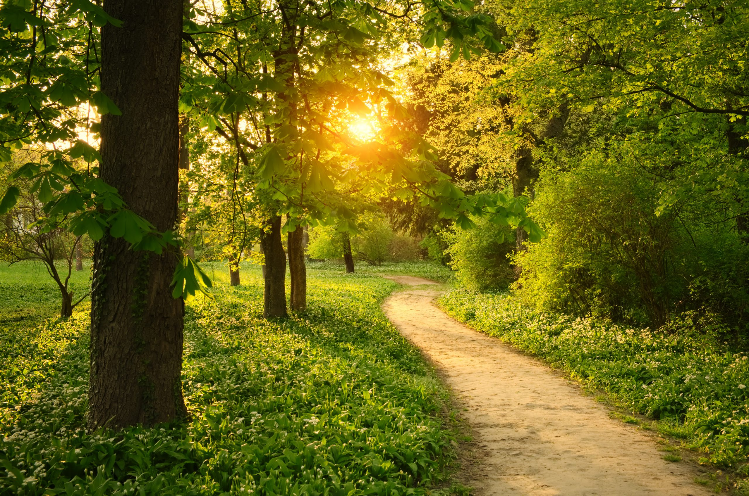 visit mulberry nature park in braselton [linux87] © 123rf