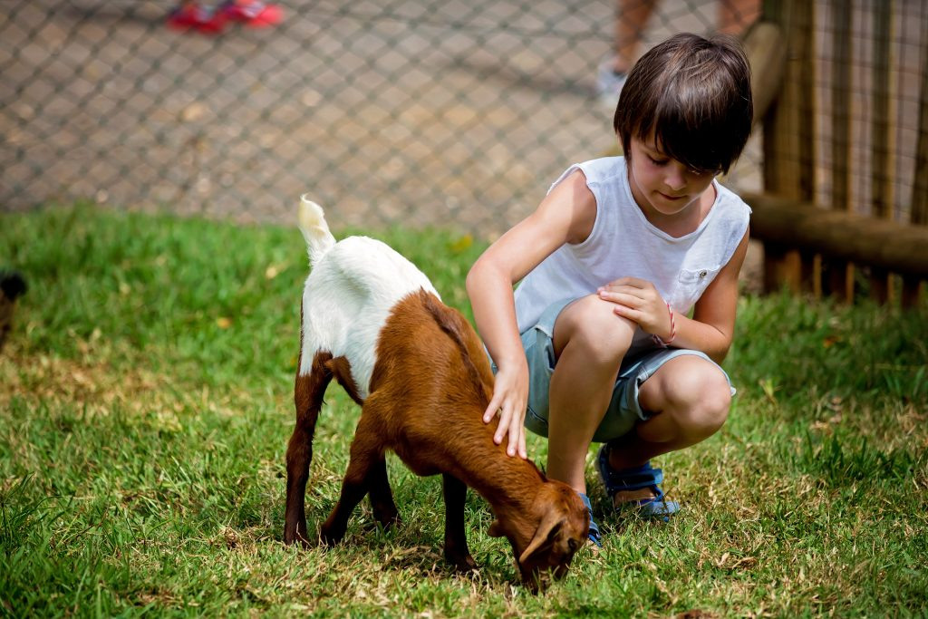 Young boy petting a goat